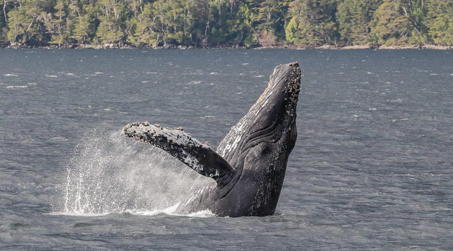 Tiempo de verano, tiempo de ballenas