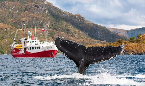 Whale-watching aboard M/V Forrest © Whale Sound