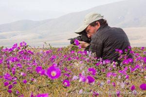 When the desert blooms in Atacama
