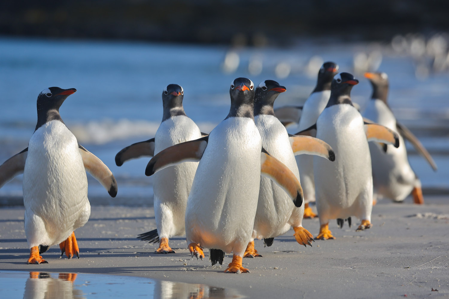 Falklands Wildlife Cruise | Aboard the Plancius | Far South Expeditions