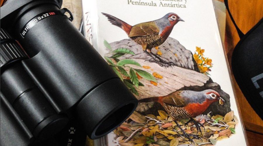 "Field Guide Overview: ""Aves de Chile"", A Companion for the Craving Neotropical Birder"